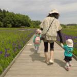 にいがたドローン空撮 カキツバタ 柏崎夢の森公園